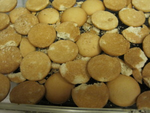 vanilla wafers layered in pan