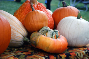 halloween and harvest festival pumpkins