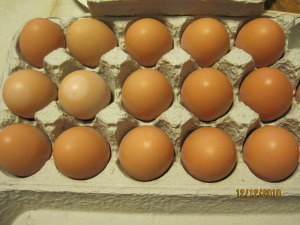 Eggs at $16.67 each