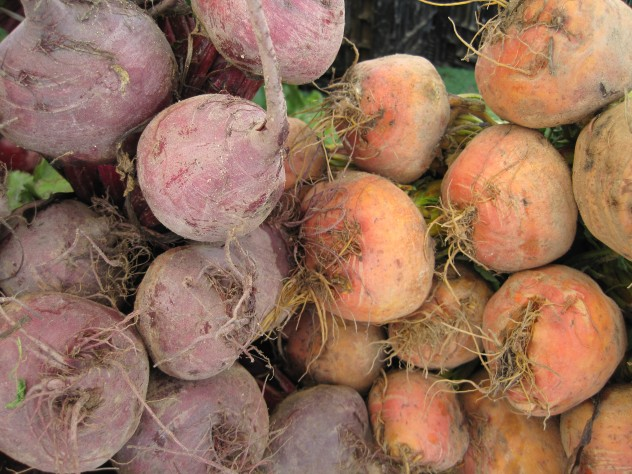 orange and red beets at the farmers market