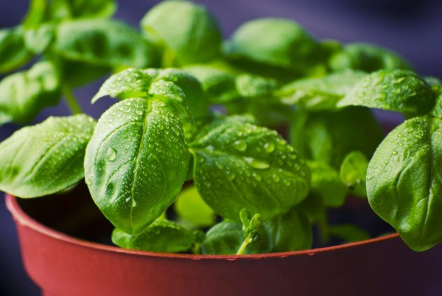 """25 """"Must-Have"""" Spices--Basil"""
